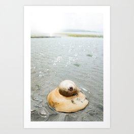 Moon Snail · ii Art Print