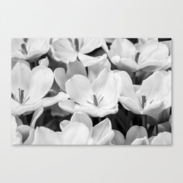 The Bloom (Black and White) Canvas Print