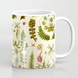 Ernst Haeckel - Hepaticae Coffee Mug
