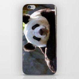 Giant Panda iPhone Skin