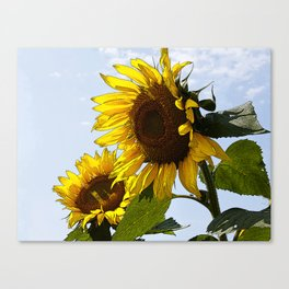 Sunflower Duet Canvas Print