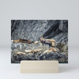 Group of Female Sea Lions and Young Mini Art Print