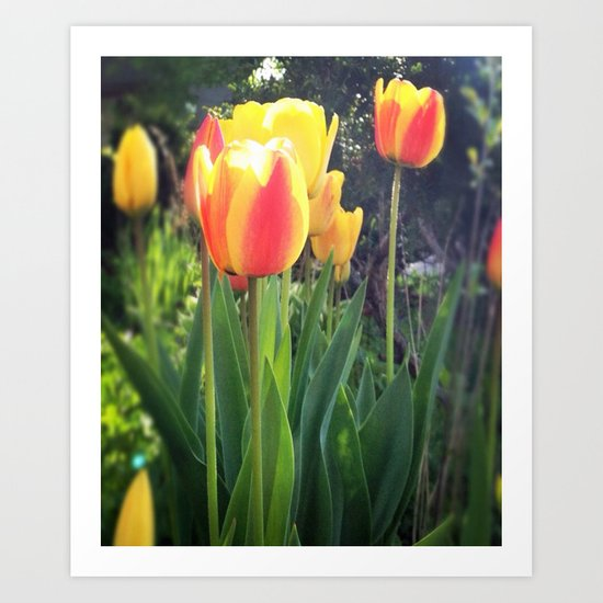 Spring Tulips in Bloom Art Print