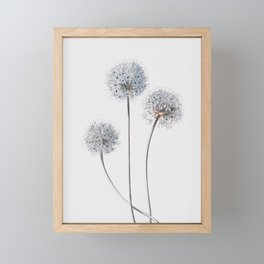 Dandelion 2 Framed Mini Art Print