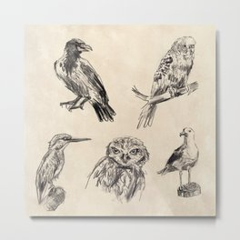 Bird vintage sketches 2 Metal Print