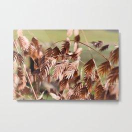 Closeup of brown (dried) plants outdoor Metal Print