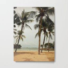 tropical palm tree of coconuts  Metal Print
