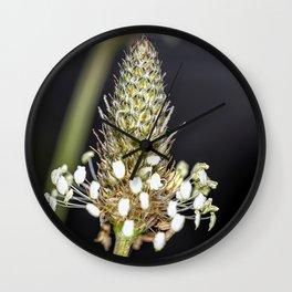 Buckhorn flower top close up Wall Clock