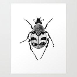 Beetle 02 Art Print