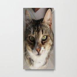 Tabby Cat Kitten Giving Eye Contact Metal Print
