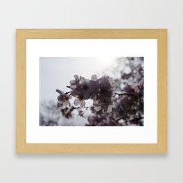Sunstruck Framed Art Print