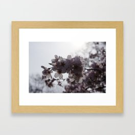 Sunstruck Framed Art Print