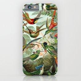 Ernst Haeckel Hummingbirds iPhone Case
