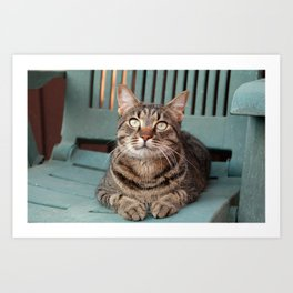Portrait of a cat Art Print