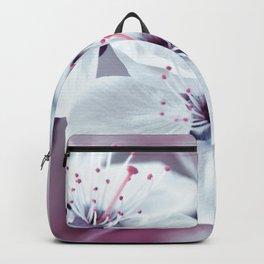 Spring 113 Backpack