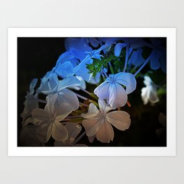 Plumbago at Sunset Art Print