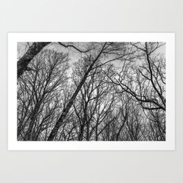 Black and white branches Art Print