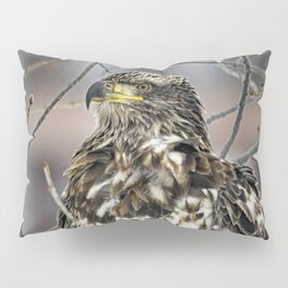 Immature Bald Eagle Pillow Sham