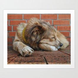 A Nice Shady Sleep Art Print