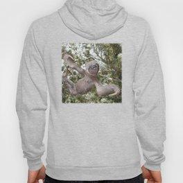 Sloth, A Real Tree Hugger Hoody