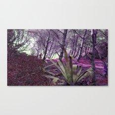 Paloma Baja Canvas Print