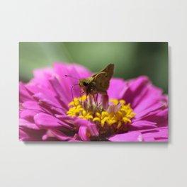 Skipper Butterfly In The Garden Metal Print