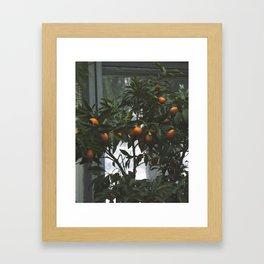 Dark Fruit, 2017 Framed Art Print