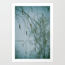 Nature's Chantilly Lace Art Print