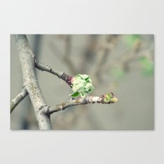 Bud in spring Canvas Print