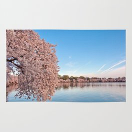 Washington DC Cherry Blossoms Rug