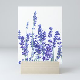 Fresh Lavender #3 #decor #art #society6 Mini Art Print