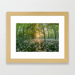 Bear's Garlic Forest Framed Art Print