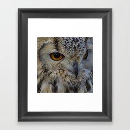 Eurasian eagle-owl, wild bird Framed Art Print