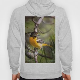 Oriole and Pine cone Hoody