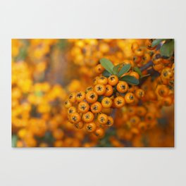 Fall berries in orange Canvas Print