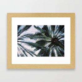 Palm trees in Miami Framed Art Print