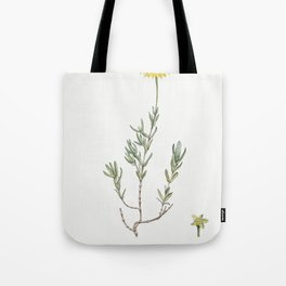 Mesembryanthemum Glaucum (Noon Flowers) from Histoire des Plantes Grasses (1799) by Pierre-Joseph Re Tote Bag