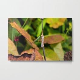 Conehead Cricket Metal Print