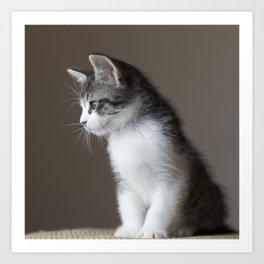 Jack - Kitten Portrait #1 (2016) Art Print