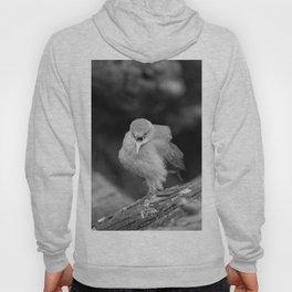 Bird - Furnarius Angry Hoody