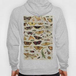 "Jan van Kessel the Elder ""An Extensive Study of Butterflies, Insects and Seashells"" Hoody"