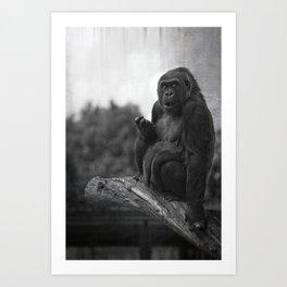 Asante The Western Lowland Gorilla Art Print