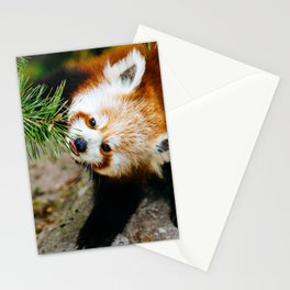 Little Red Panda Stationery Cards