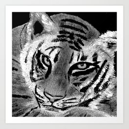 Tiger with White Background Art Print