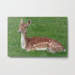 Female Deer Metal Print