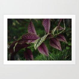 Exotic leaves Art Print