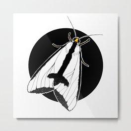 Clymene Moth (Haploa clymene) | BUGSPOTTING SERIES Metal Print
