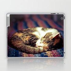 Cozy Curled Up Kitten  Laptop & iPad Skin