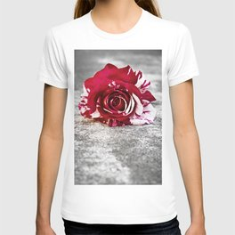 Variegated Rose on Concrete T-shirt