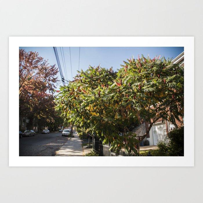Autumn Sumac Art Print